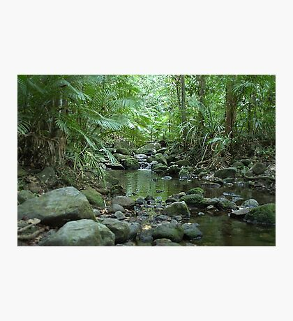 Rainforest Trickle Photographic Print