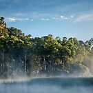 Morning at the swamp by Fran53