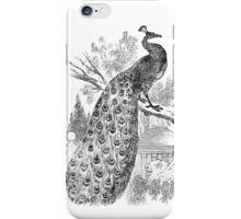 Vintage Peacock Bird Illustration Retro 1800s Black and White Image iPhone Case/Skin
