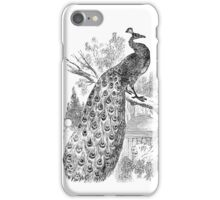 Vintage Peacock Bird Illustration Retro 1800s Black and White Image iPhone Case/Skin