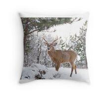 Frosty Buck - White-tailed Buck, Ottawa Throw Pillow