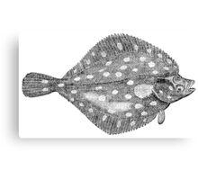 Vintage Flatfish Fish Illustration Retro 1800s Black and White Flounder Image Canvas Print