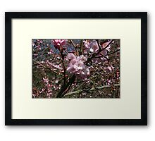 Cherry Tree Flower Framed Print
