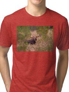 Moose in rut - Algonquin Park, Canada Tri-blend T-Shirt