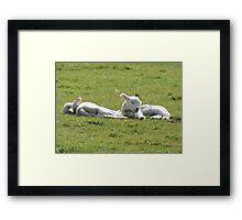 It's Tiring Being A Cute Lamb Framed Print