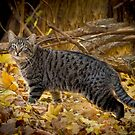 FERAL CAT, COLONY 23 by Diane Peresie