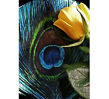 Peacock's Rose Photographic Print