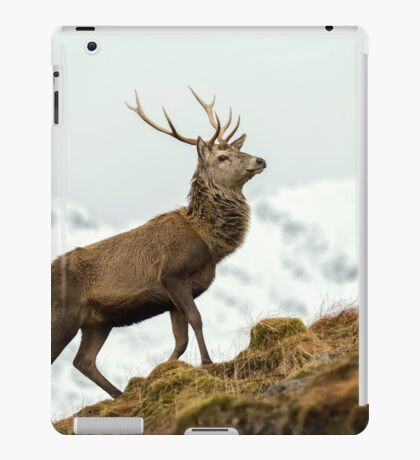Red Deer Stag in Winter iPad Case/Skin