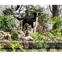 Terrier Standing Guard Photographic Print