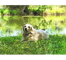 Yellow Lab by Lake Photographic Print