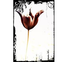 Single tulip Photographic Print