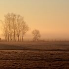Misty morning in March by cuprum