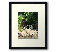 Lazy days at the national zoo Framed Print
