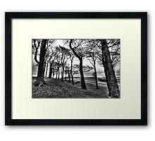 Chanctonbury Ring Mono Framed Print