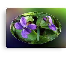 the first violets Canvas Print