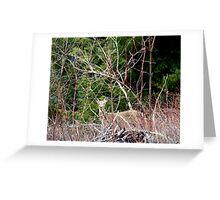 White Tailed Deer through Brush Greeting Card