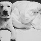 Sleepy Labrador by Louise Fahy