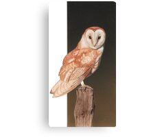 Barn owl. Canvas Print