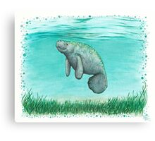 Mossy Manatee ~ Watercolor Canvas Print