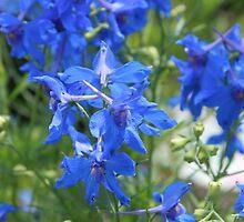 Blue by Joy Fitzhorn