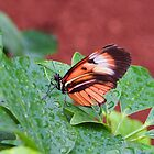 Postman Butterfly in the Rain by Linda Makiej