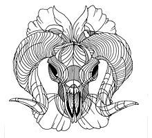Rams Horns Photographic Print