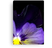 Mystery Purple Pansy  Canvas Print