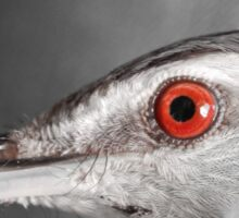 Red-eyed Vireo Sticker
