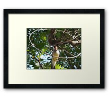 Put a Ring on It  Framed Print