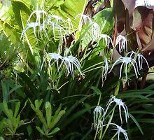 Flowers n Ferns by Judy Woodman