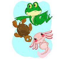 amphibian reptilian Photographic Print
