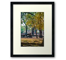 Ebony Grove Zambia Framed Print