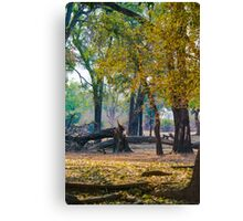 Ebony Grove Zambia Canvas Print
