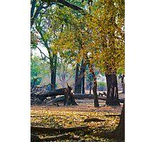 Ebony Grove Zambia Photographic Print