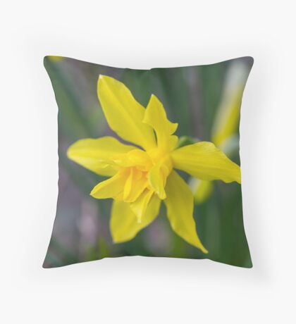daffodil in spring Throw Pillow