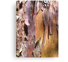 Salmon Gum Bark Canvas Print