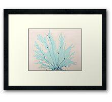 Calypso Sky Fan Coral Framed Print