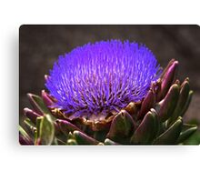 Artichoke in flower Canvas Print