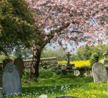 Churchyard Cherry Blossom Sticker