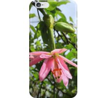 Taxo Fruit Blossom iPhone Case/Skin