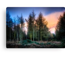Houghton Woods Canvas Print