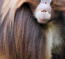 Baboon Looking At Me Sticker