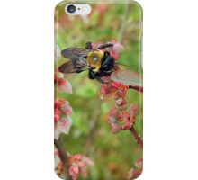 Bumble Bee on a Blueberry Bloom iPhone Case/Skin