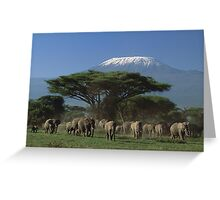 Gifts designs of Mt.Kilimanjaro Elephants on move Greeting Card