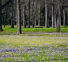 Frühling im Park by Erwin G. Kotzab