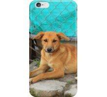 Brown Dog on a Street iPhone Case/Skin