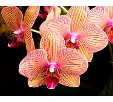 Orchid Show Favorite Photographic Print
