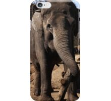 asia elephant iPhone Case/Skin