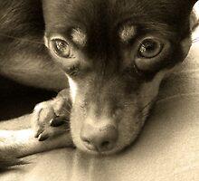 My dog Minnie by Sherri Fink