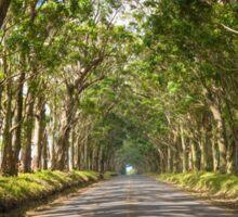 Eucalyptus Tree Tunnel - Kauai Hawaii Sticker